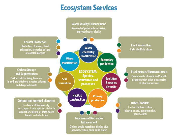 Examples of forest ecosystem services (adapted from the millennium.