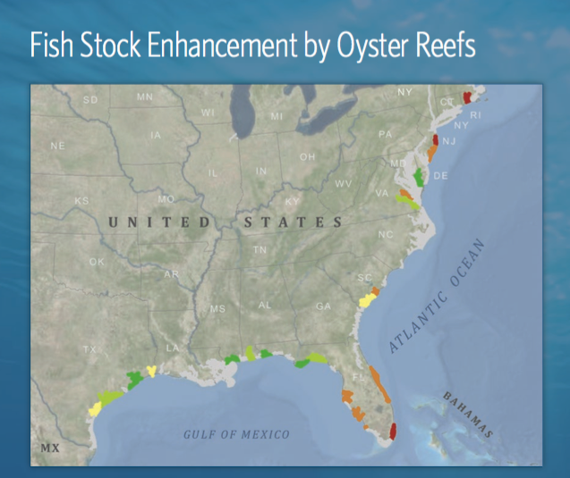 Fish Stock Enhancement by Oyster Reefs