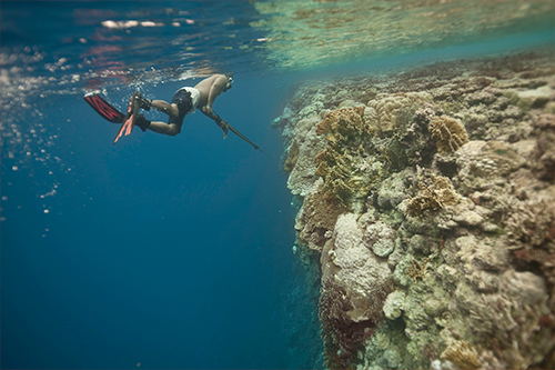A local spear-gun fisherman searches for reef fish, like parrot fish and trivali, in the lagoon waters of Ant Atoll, Pohnpei, Federated States of Micronesia. Kirino. Photo credit: Nick Hall