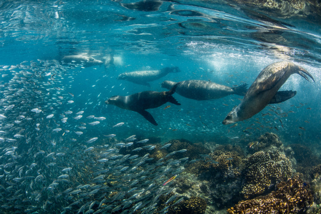 Outstanding Universal Value. While it is hard to put a number on such values, World Heritage Sites are widely celebrated for their natural values. Left: Sea lions and the rich marine life of the Gulf of California.