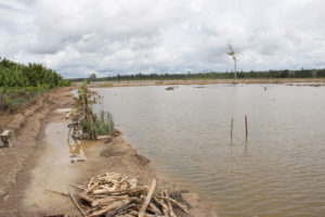 Vast areas of mangroves have already been converted to shrimp aquaculture ponds across Indonesia and the destruction continues, as shown here in Berau. The loss of mangroves emit significant amounts of carbon, which adds to the global issue of anthropogenic climate change.
