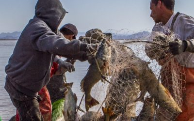 Habitat, Fish and Profit: Combining Fisheries Ecology and Economy