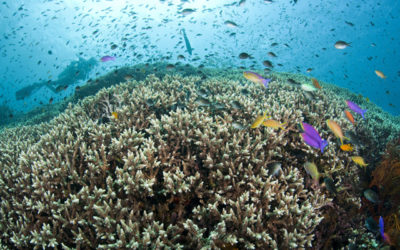 The Ocean is a Global Climate Solution