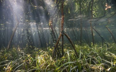 Accounting for Mangroves in Flood Protection