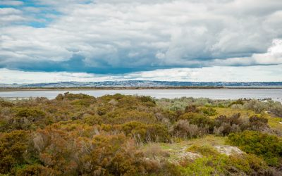 Notes from the Field: Estimating Biomass in Australian Tidal Saltmarshes
