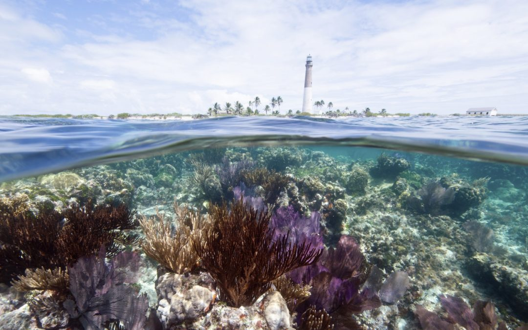 Collaboration with Microsoft and Esri to Enhance Coral Reef Tourism Model