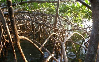 Explore the Mangrove Restoration Potential Mapping Tool