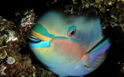 MOW Maps of Micronesia Fisheries Can Help Inform Coral Reef Management