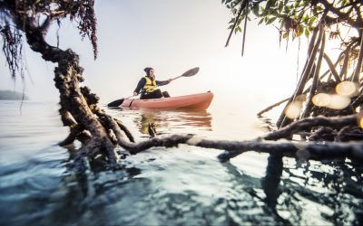 New Mapping Ocean Wealth Study Maps the Opportunity for Mangrove Tourism Worldwide