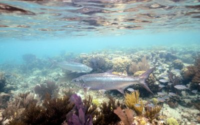 Modelling and Mapping Fishing Impact and the Current and Potential Biomass of Coral-Reef Fishes in South Florida