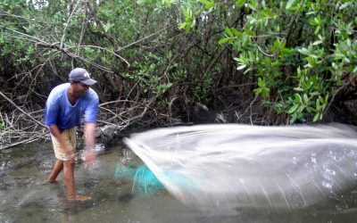 New study finds that mangroves support over 4 million small scale fishers globally