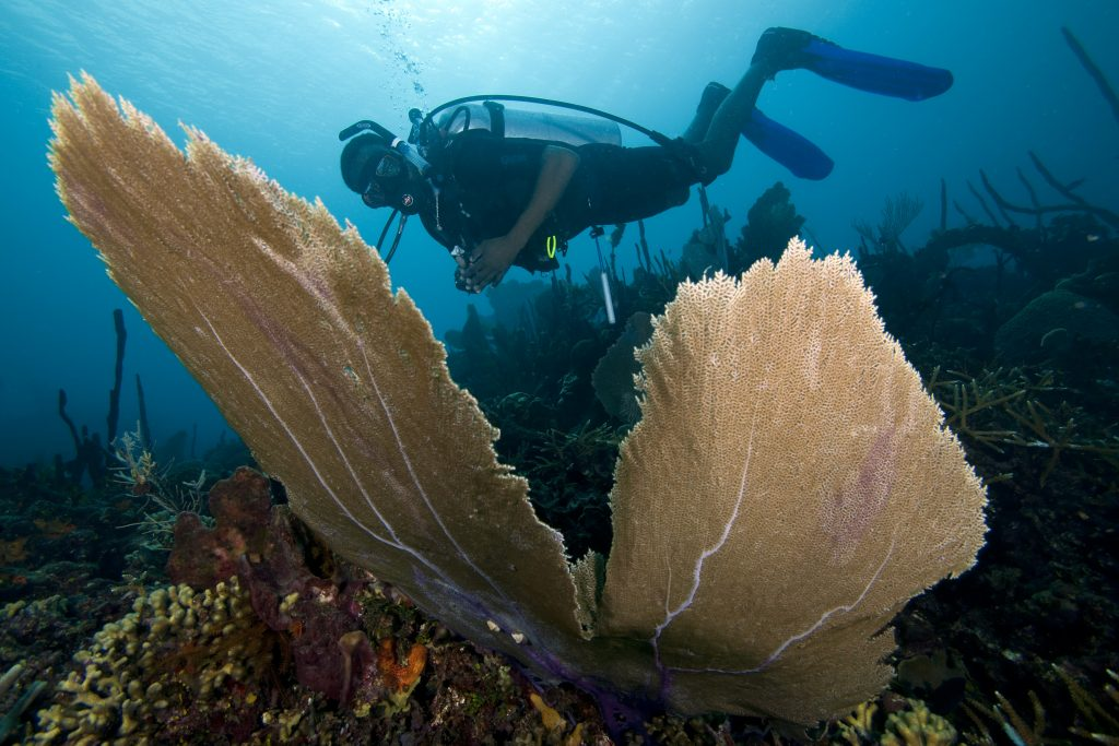 Coral Reef Tourism